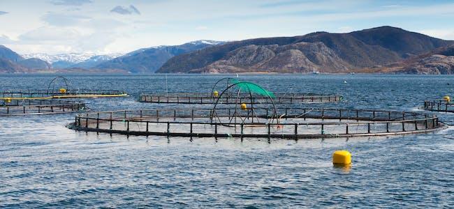 """Fleire aktørar frå havbruksnæringa samarbeider om pilotprosjektet """"Blå åker"""", som skal sørge for viktig kompetanse for ein framtidig vekst i næringa i Ryfylke."""