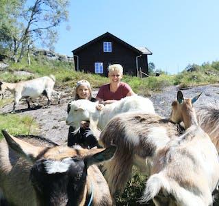 Stina Fosen og dottera Ida synest livet som geitebudeier på Litlastølen er godt.
