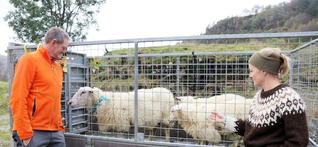 Karl Gustav Lofthus har funne fleire av sauene til Hilde Håland og familien. Skjoldastraumbuane har hatt sauene sine i Austarheimsdalen i sommar.
